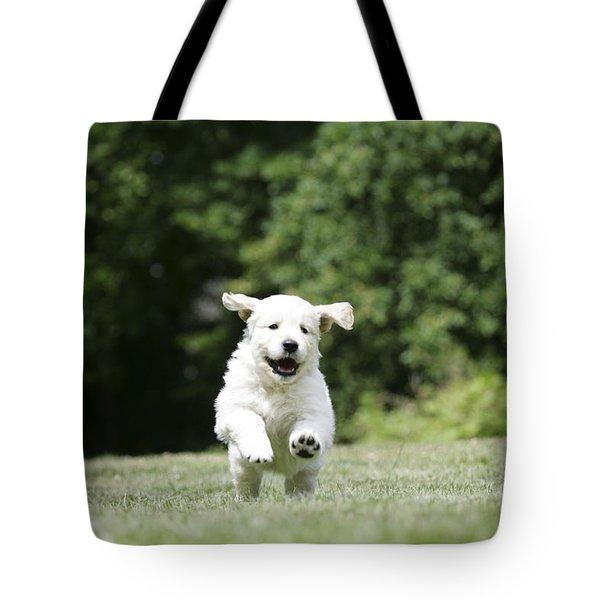 Golden Retriever Puppy Tote Bag by John Daniels