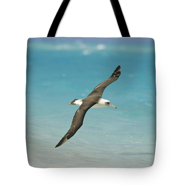 Laysan Albatross Flying Midway Atoll Tote Bag by Tui De Roy