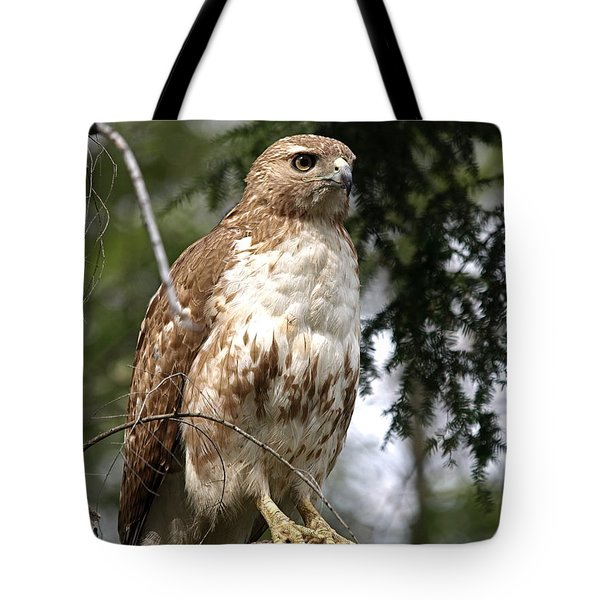 Red Tail Hawk 2 Tote Bag by Peter Gray