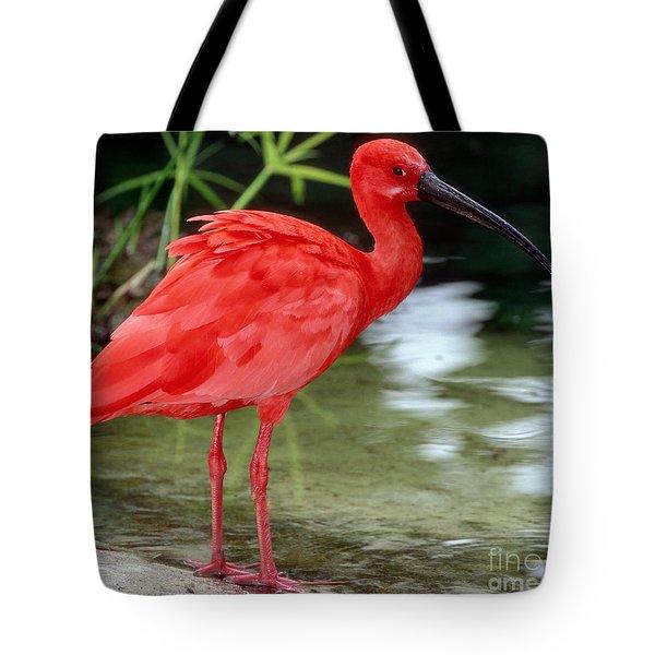 Scarlet Ibis Tote Bag by Millard H Sharp