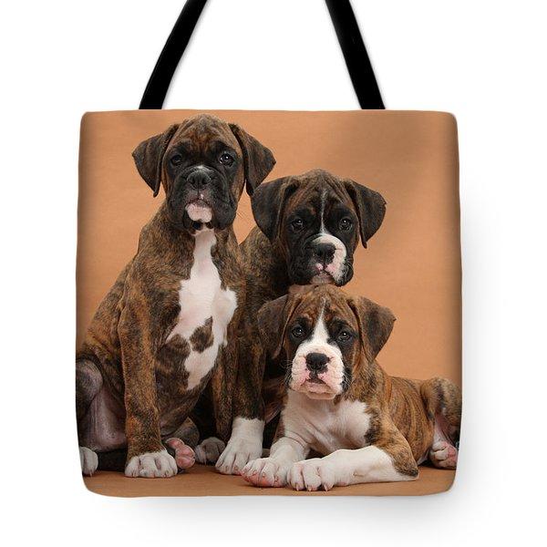 Three Boxer Puppies Tote Bag by Mark Taylor