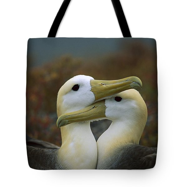 Waved Albatross Pair Bonding Galapagos Tote Bag by Tui De Roy