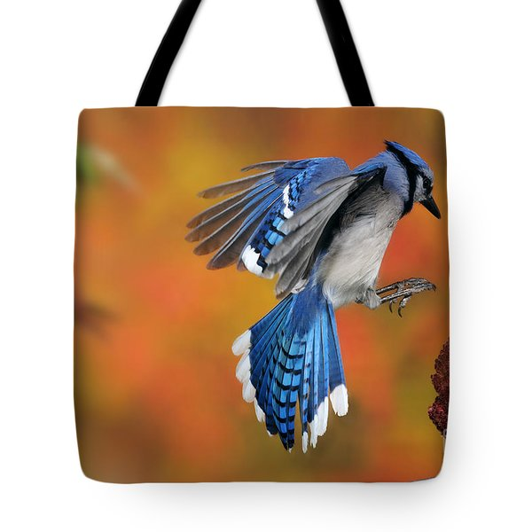 Blue Jay Tote Bag by Scott Linstead