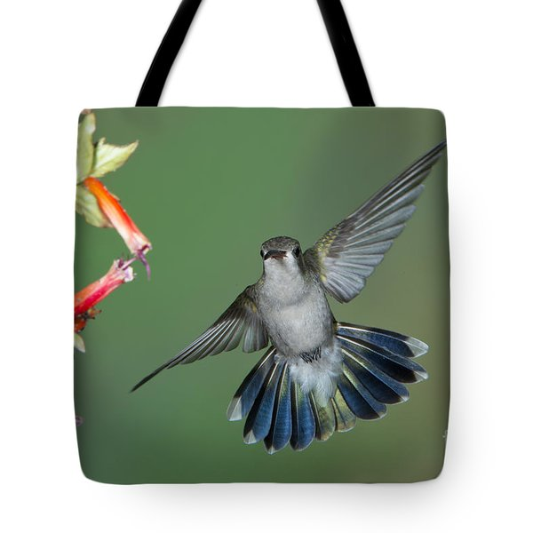 Broad-billed Hummingbird Tote Bag by Anthony Mercieca
