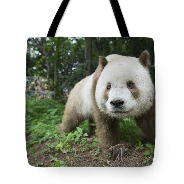 Giant Panda Brown Morph China Tote Bag by Katherine Feng