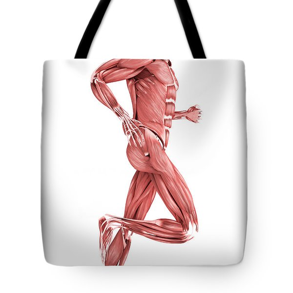 Medical Illustration Of Male Muscles Tote Bag by Stocktrek Images