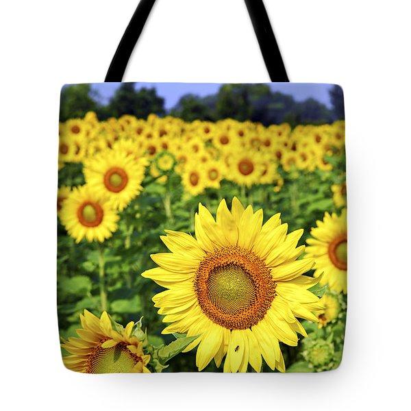 Sunflower field Tote Bag by Elena Elisseeva