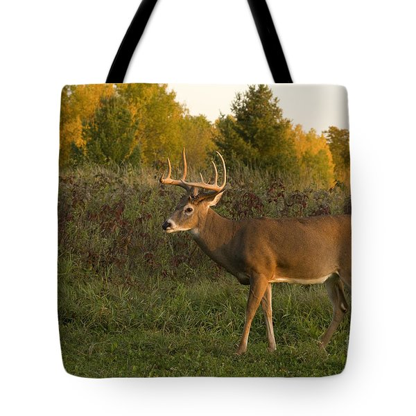 White-tailed Buck In Fall Tote Bag by Linda Freshwaters Arndt