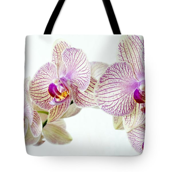 Phalaenopsis Orchid Phalaenopsis Sp Tote Bag by Lawrence Lawry