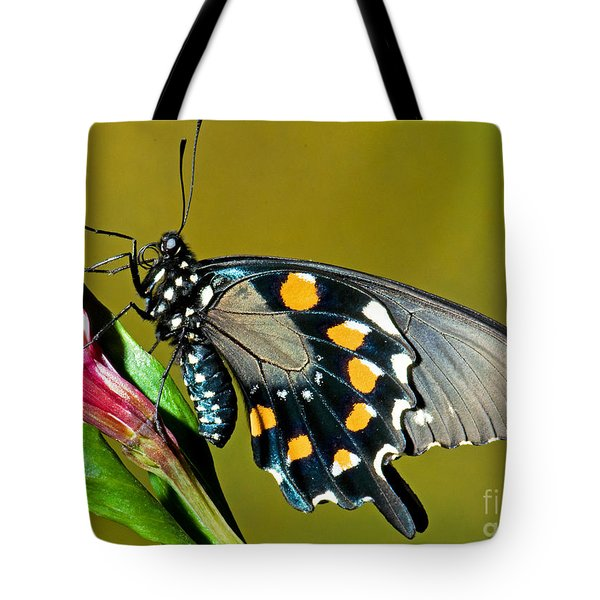 Pipevine Swallowtail Butterfly Tote Bag by Millard H. Sharp