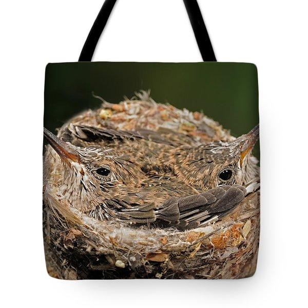 Broad Billed Hummingbird Tote Bag by Scott Linstead