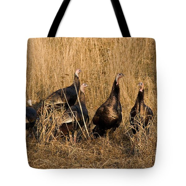 Eastern Wild Turkeys Tote Bag by Linda Freshwaters Arndt