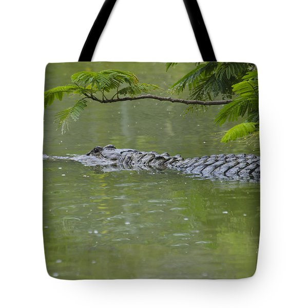 American Alligator Tote Bag by Mark Newman