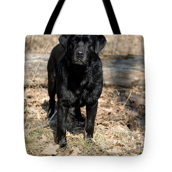 Black Labrador Retriever Tote Bag by Linda Freshwaters Arndt