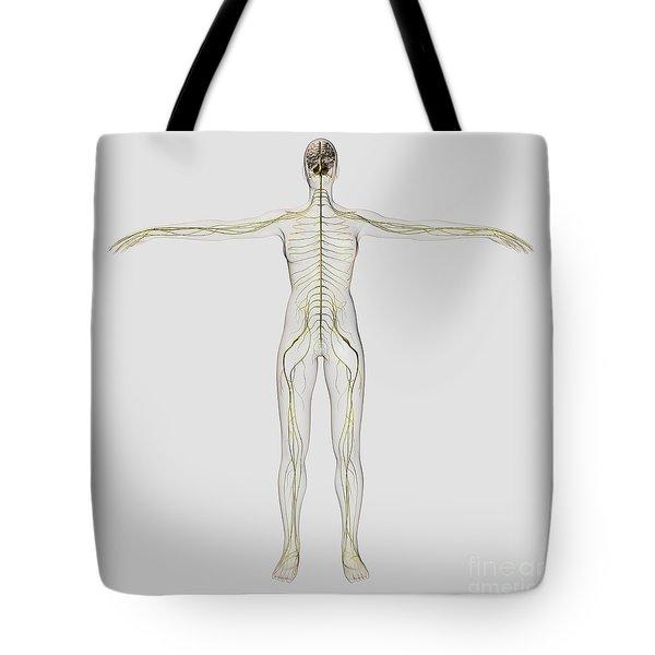Medical Illustration Of The Human Tote Bag by Stocktrek Images