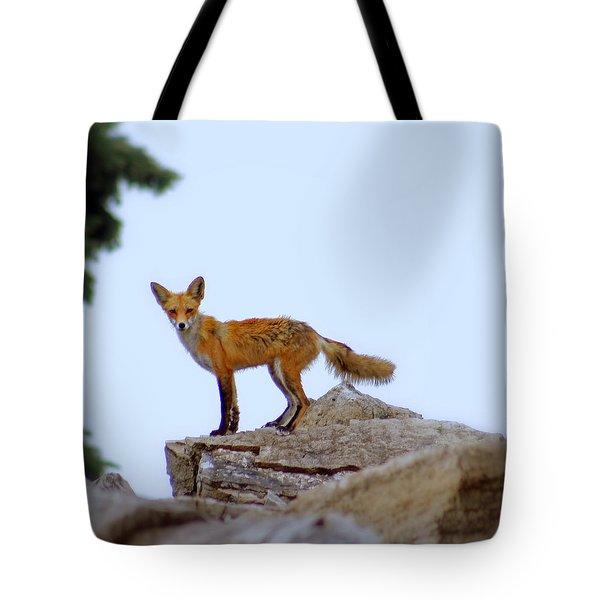 A Fox On The Rocks Tote Bag by Kay Novy