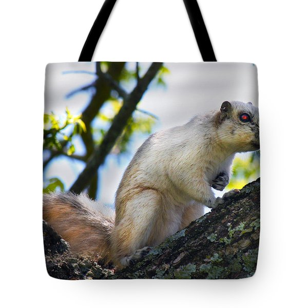 A Fox Squirrel Pauses Tote Bag by Betsy C Knapp