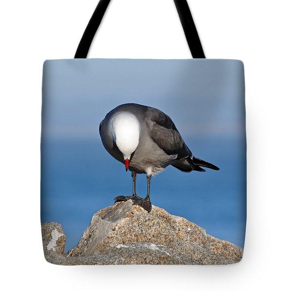 A Heermann's Gull Investigates Tote Bag by Susan Wiedmann