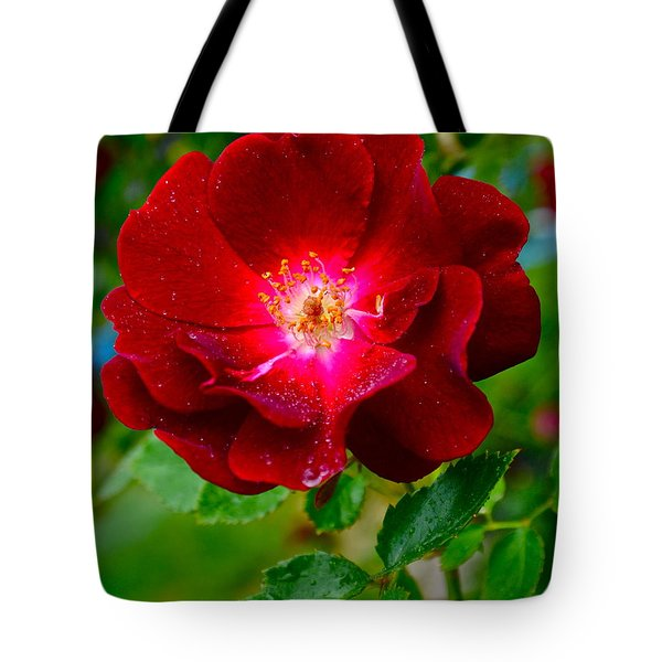 A Rose Is A Rose Tote Bag by Frozen in Time Fine Art Photography
