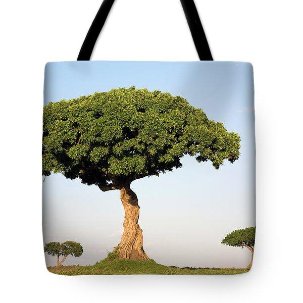 Acacia Trees Masai Mara Kenya Tote Bag by Ingo Arndt
