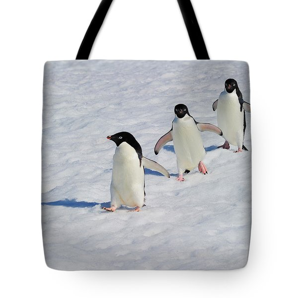 Adelie Patrol Tote Bag by Tony Beck