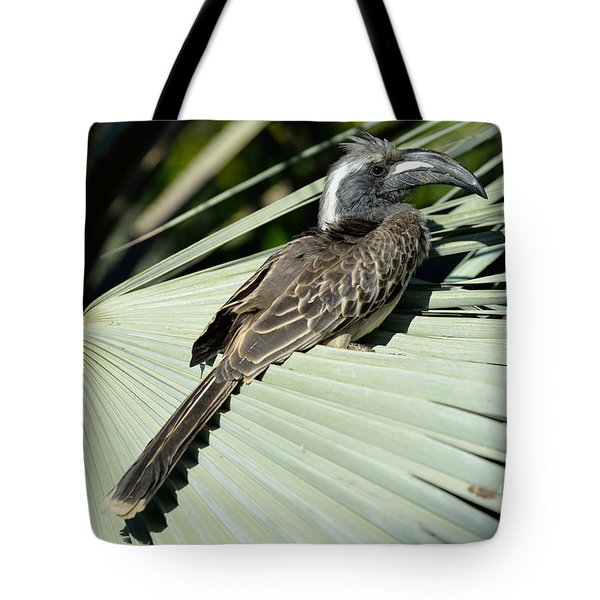 African Grey Hornbill Tote Bag by George Atsametakis