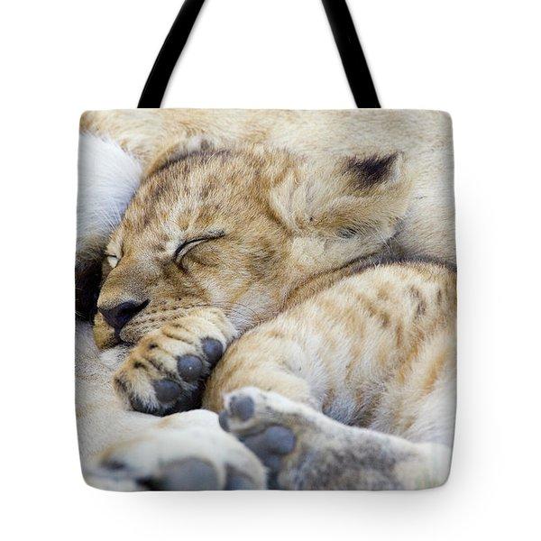 African Lion Cub Sleeping Tote Bag by Suzi Eszterhas