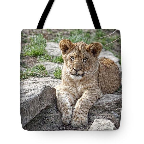 African Lion Cub Tote Bag by Tom Mc Nemar
