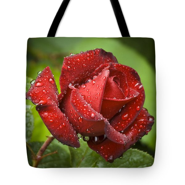After The Rain Tote Bag by Frank Tschakert