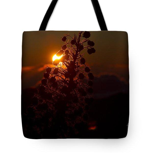 Ahinahina - Silversword - Argyroxiphium sandwicense - Sunrise on the Summit Haleakala Maui Hawaii  Tote Bag by Sharon Mau