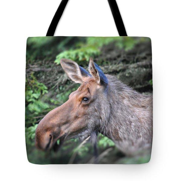 Alaska Moose Tote Bag by Debra  Miller