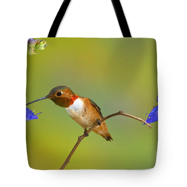 Allens Hummingbird Tote Bag by Anthony Mercieca