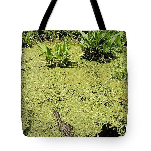 Alligator In Corkscrew Swamp, Florida Tote Bag by Gregory G. Dimijian