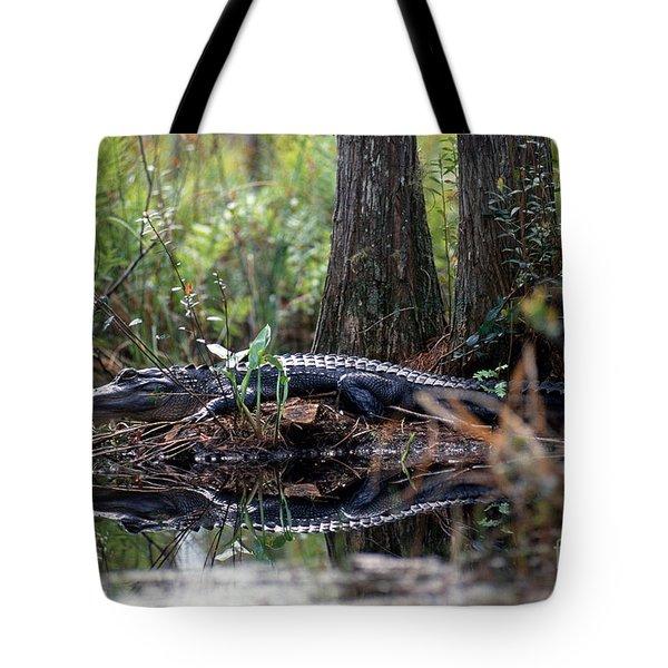Alligator In Okefenokee Swamp Tote Bag by William H. Mullins