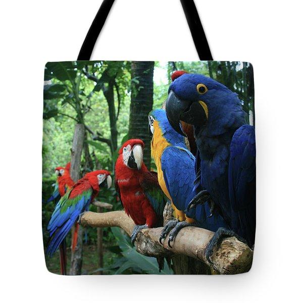 Aloha Kaua Aloha Mai No Aloha Aku Beautiful Macaw Tote Bag by Sharon Mau