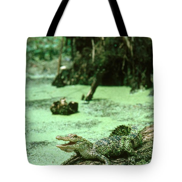 American Alligator Tote Bag by Gregory G. Dimijian, M.D.