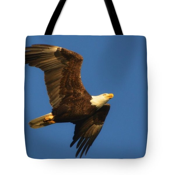 American Bald Eagle Close-ups Over Santa Rosa Sound With Blue Skies Tote Bag by Jeff at JSJ Photography