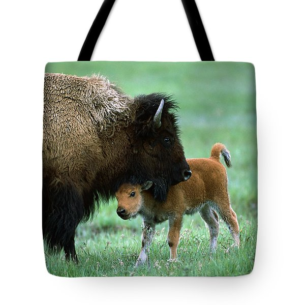 American Bison And Calf Yellowstone Np Tote Bag by Suzi Eszterhas