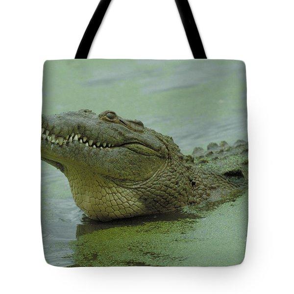 American Crocodile Tote Bag by Raymond Cramm