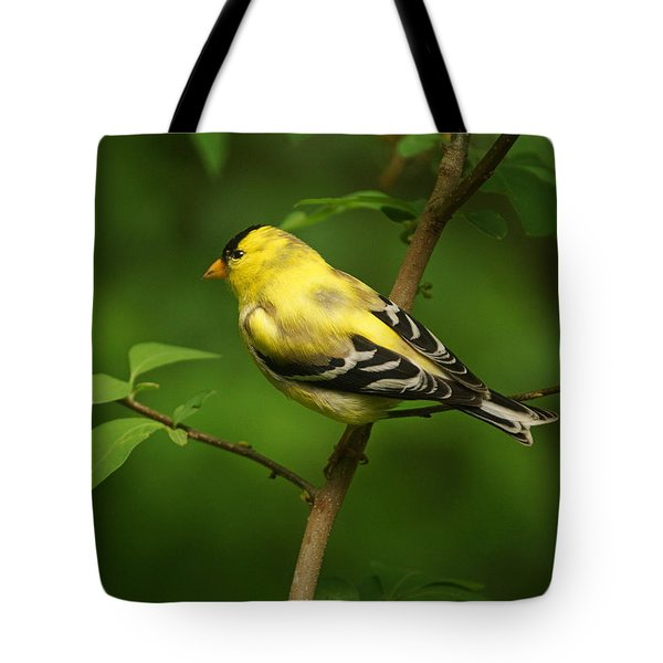 American Gold Finch Tote Bag by Sandy Keeton