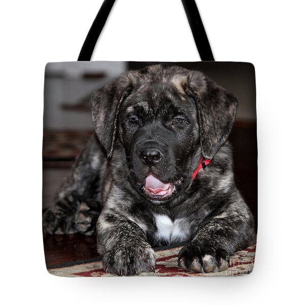 American Mastiff Puppy Tote Bag by Luv Photography