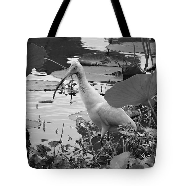 American White Ibis Black And White Tote Bag by Dan Sproul