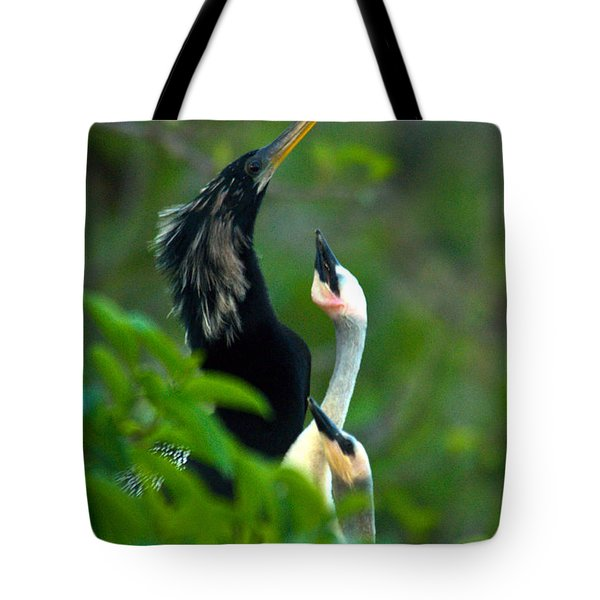 Anhinga Adult With Chicks Tote Bag by Mark Newman