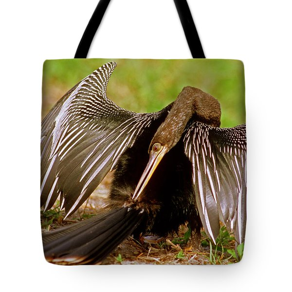 Anhinga Anhinga Anhinga Preening Tote Bag by Millard H. Sharp