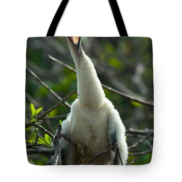 Anhinga Chick Tote Bag by Mark Newman