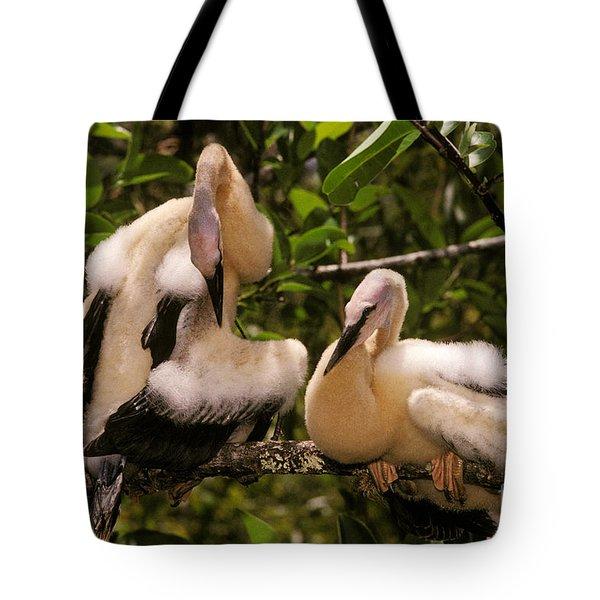 Anhinga Chicks Tote Bag by Ron Sanford