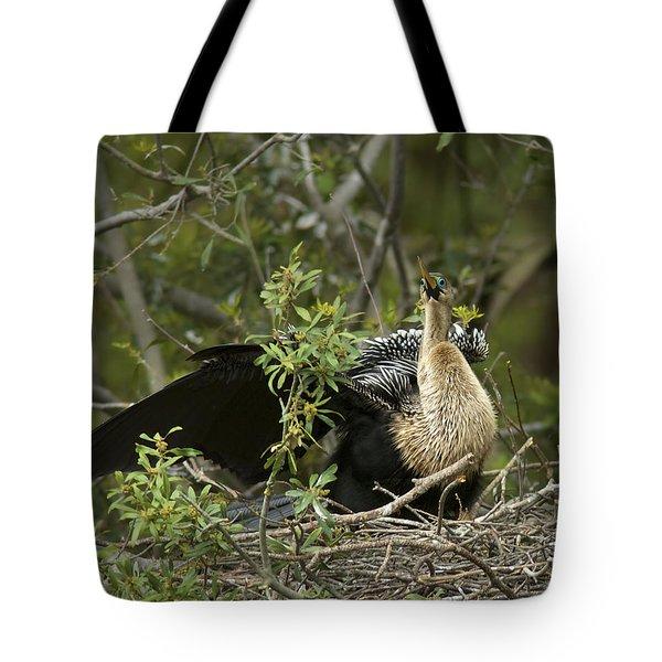 Anhinga Mama Tote Bag by Phill Doherty