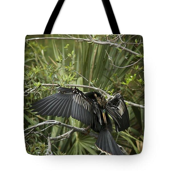 Anhinga Papa Tote Bag by Phill Doherty