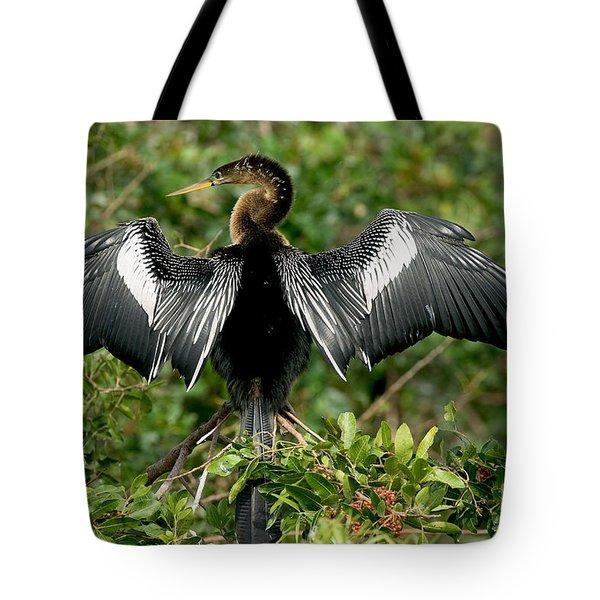 Anhinga Sunning Tote Bag by Anthony Mercieca