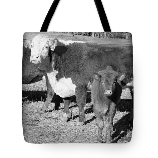 Animals Cows The Curious Calf Black And White Photography Tote Bag by Ann Powell